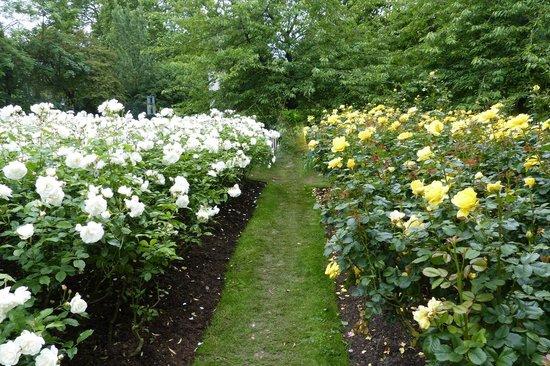 queen-mary-s-gardens