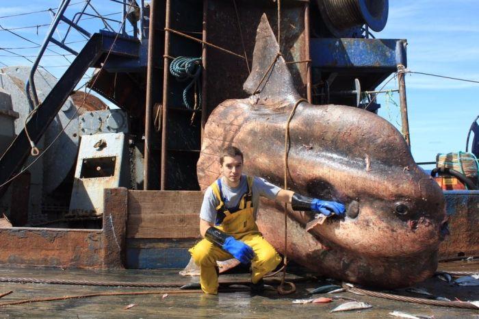 Creaturi ciudate gasite in oceane (20)