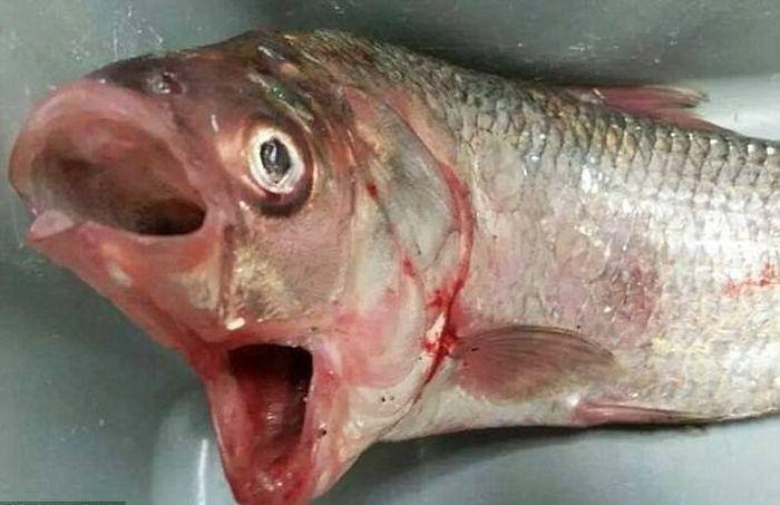 Creaturi ciudate gasite in oceane (3)