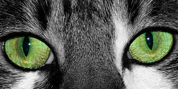Lucky's Eyes