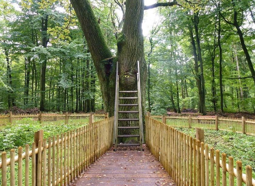 Stejarul cu adresa 3shat (1)