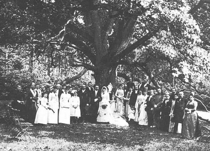 Stejarul cu adresa 3shat (7)