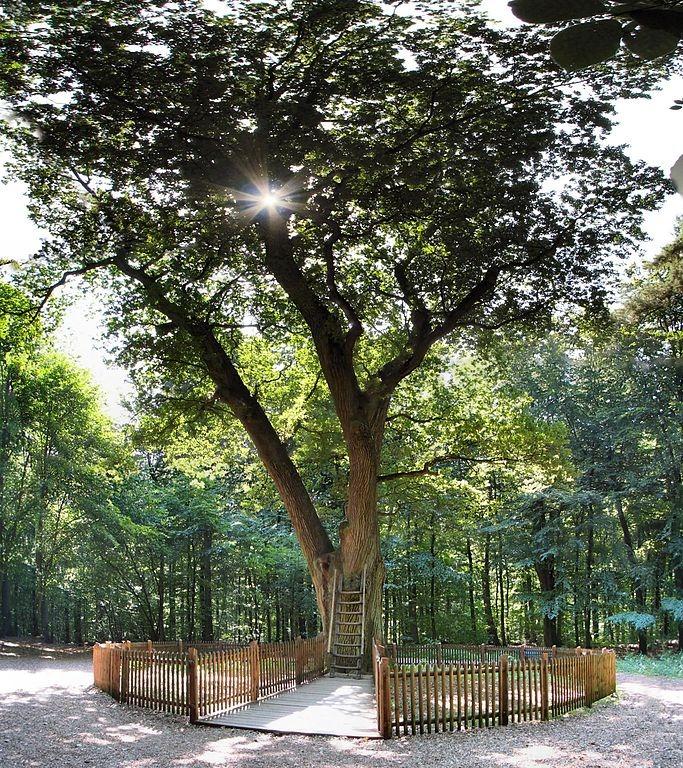 Stejarul cu adresa 3shat (8)
