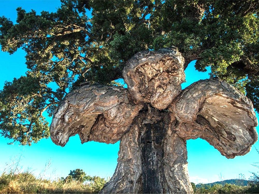 Copaci europeni cu cele mai interesante povesti