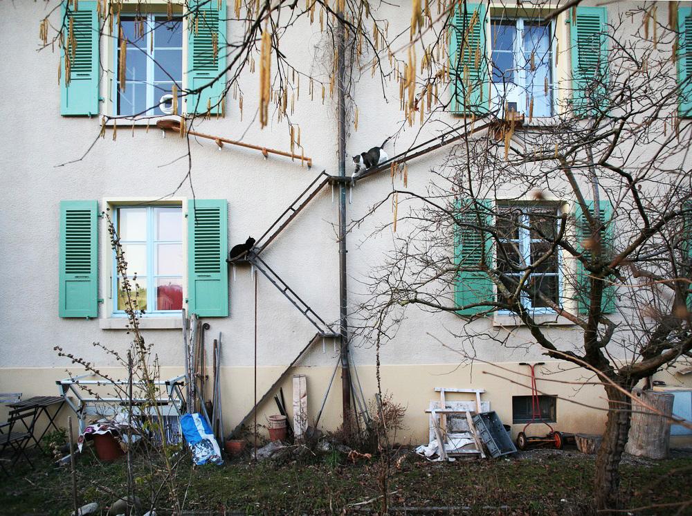 Scările pentru pisici din Berna
